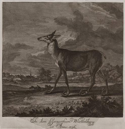 Тварина, знайдена мертвою у так званих лісах Кірххайма у Штірії. 1736.