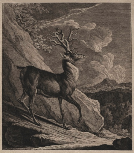 A Deer Killed near the Vagna Palace in Styria. 1744.